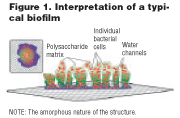 Using Ozone in the Prevention of Bacterial Biofilm Formation and Scaling