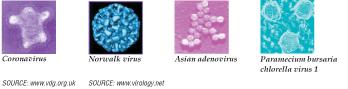 Virology 101