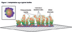 Measuring the Effects of AOP as a Biocide on Pseudomonas Biofilms in a Model Jetted Tub System