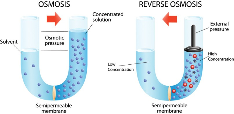 osmosis and highest water concentration
